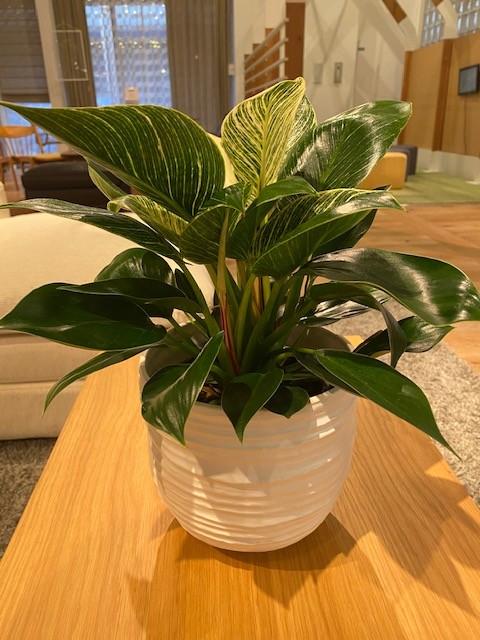 本日入荷の観葉植物のご紹介です!