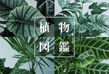 六甲/自然図鑑_メールマガジン ol